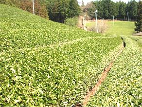 童仙房の農園写真01